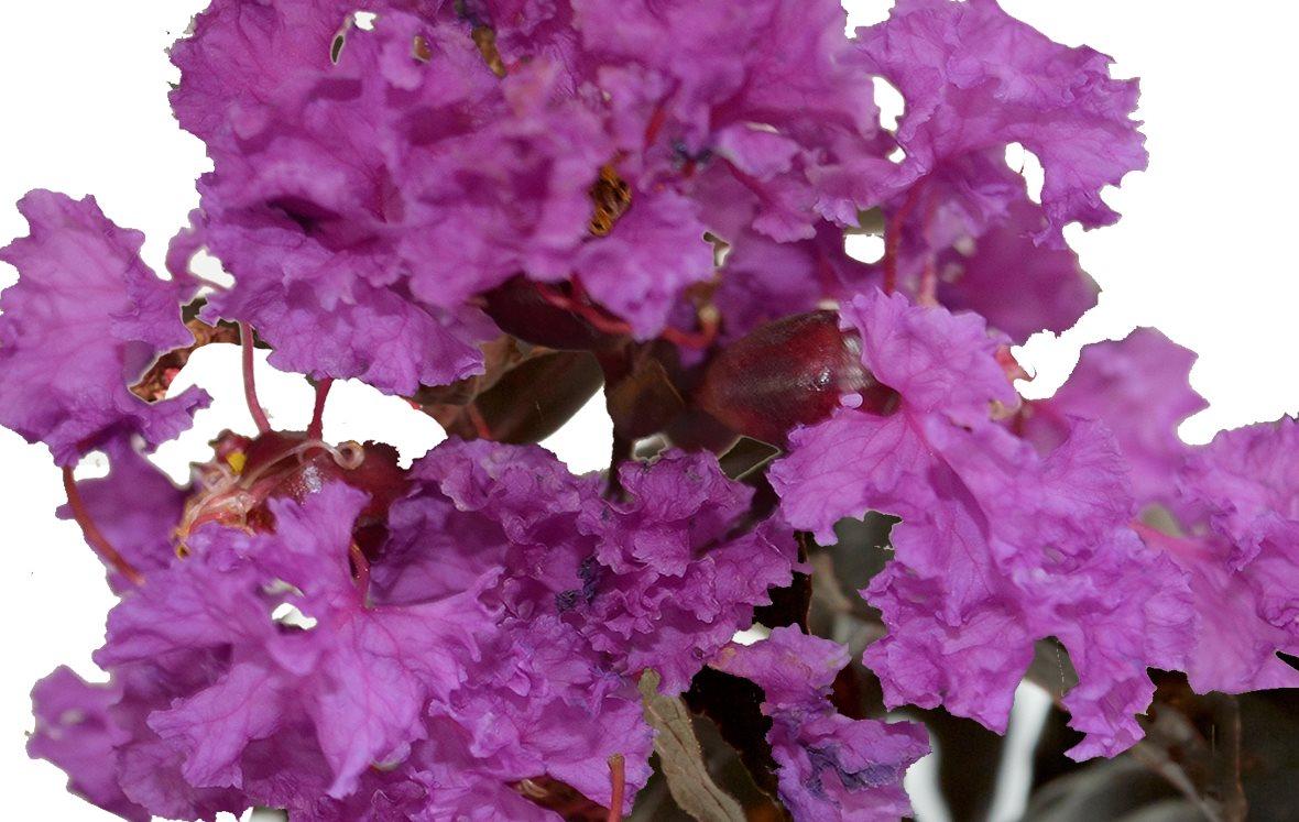 New Purely Purple (1).jpg